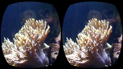 Aquarium Videos VR