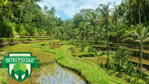EXPERIENCE BALI - Island of the Gods3